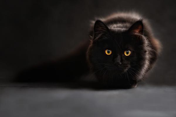 najlepsza karma dla kota