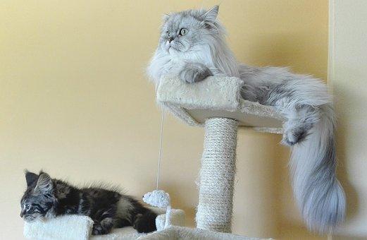 ekskluzywne drapaki dla kotów