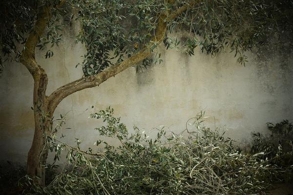 przycinanie drzew bydgoszcz