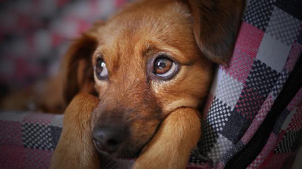 psie legowiska dla małych ras