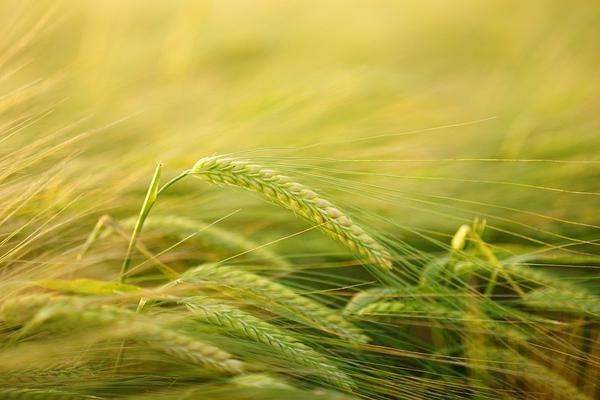 wysokowydajny organiczny stymulator wzrostu roślin