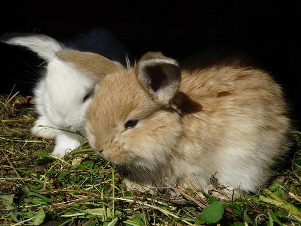 paśnik dla królików